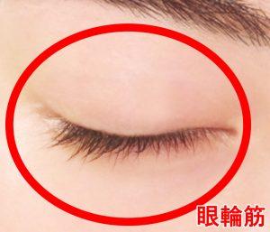 眼輪筋イメージ